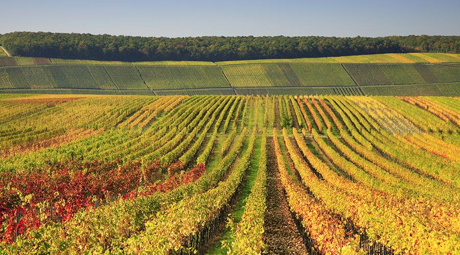4* Bordeaux with wine tasting